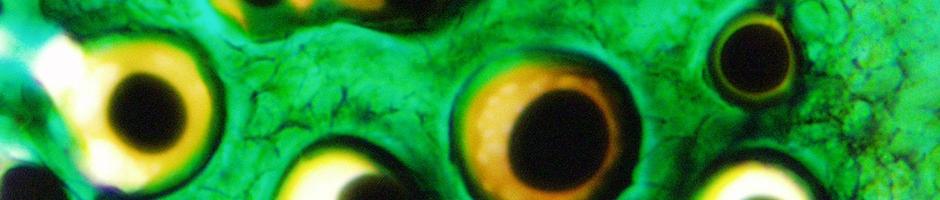 fondo-microscopia